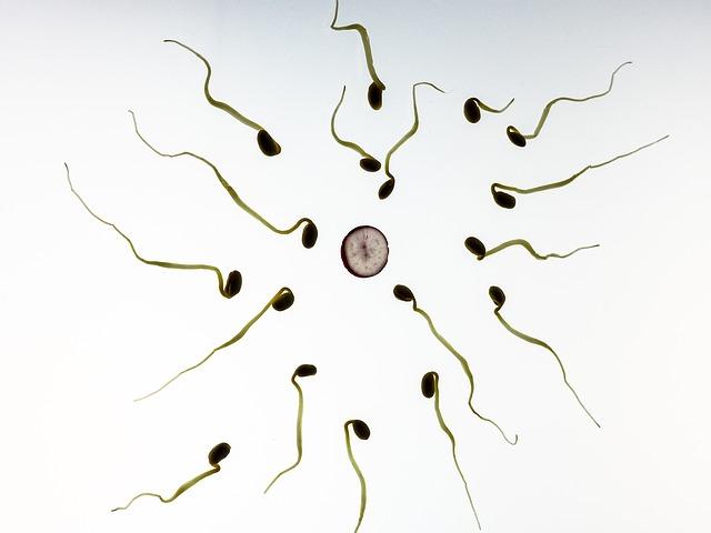 sperm-956480_640